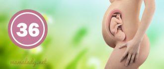 36 тиждень вагітності