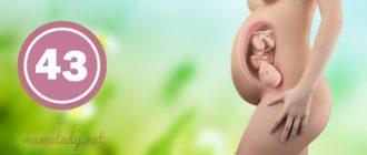 43 неделя беременности